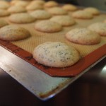 Orange Poppyseed Cookies