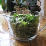 The Basil before Blanching
